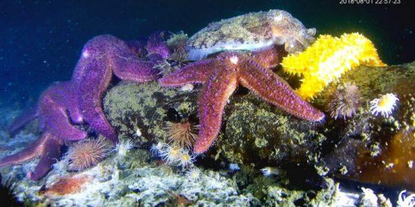 estrellas-de-mar-y-sepia